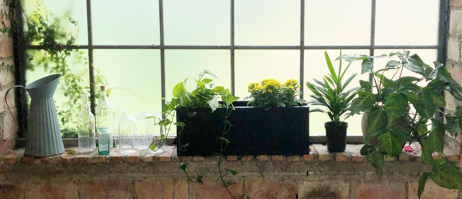 visuel-principal-jardinhiver