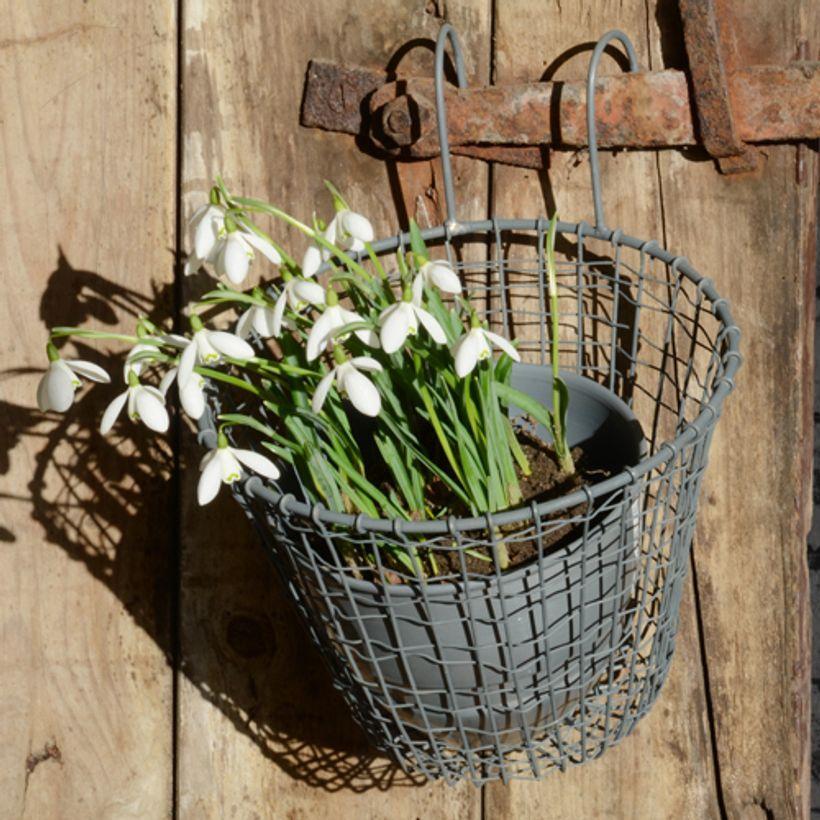 Idée déco - Panier pour pot de fleurs en métal filaire